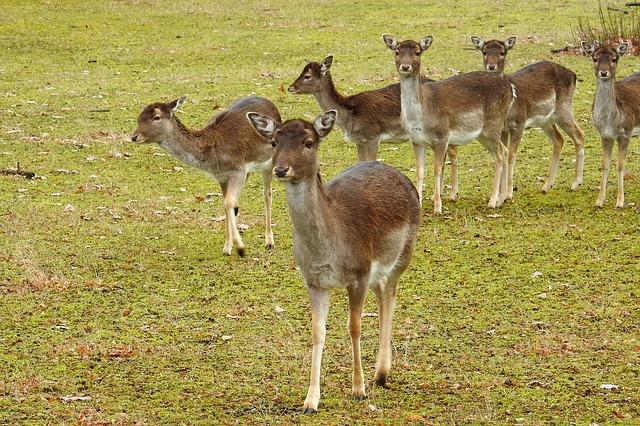 Deer project